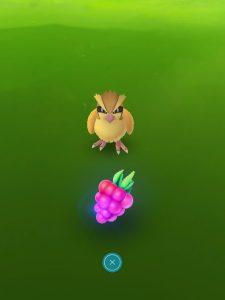 Donnez une Baie Framby au Pokémon